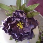 Purple peony 1